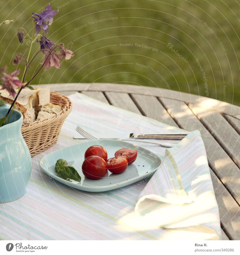 Summer Meadow Spring Garden Bright Wind Beautiful weather Joie de vivre (Vitality) Bread Plate Knives Tomato Vase Vegetarian diet Fork Wooden table