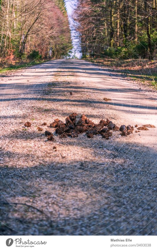 Horse droppings on a forest path Worm's-eye view Day Walking Brown Gray Disgust Crap Excretion Feces horse apple Animal again ihh disgusting horse apples