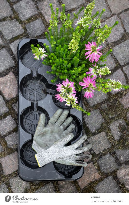 Garden gloves and plant with black disposable pallet gardening gloves Plant Gardening One-way pallet Black plastic Plastic stones Flower Summer Gloves