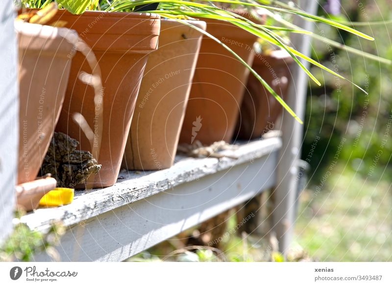 in the garden, planted clay pots stand in a row on an old garden bench Flowerpot Garden Bench Garden bench Clay pot plants Summer Spring Shallow depth of field