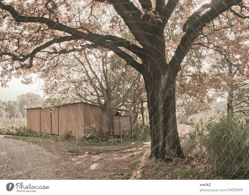 Tin hut and tree blossom Hut sheet metal Tree Sunlight Beautiful weather Peaceful Exterior shot Colour photo Deserted Nature Spring Sky Detail Plant Warmth