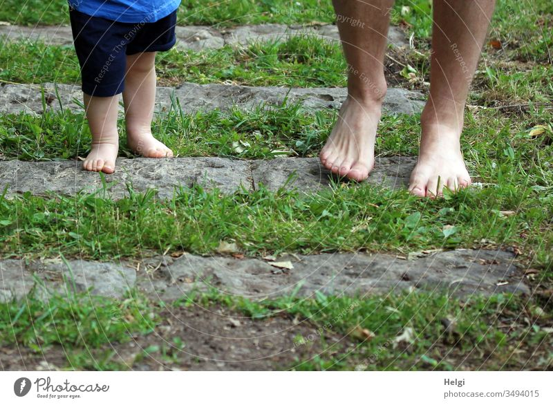 small children's feet and big men's feet on a barefoot path with grass and stones Children's Feet Men's Feet Barefoot Walking Grass Going feel Legs Toes