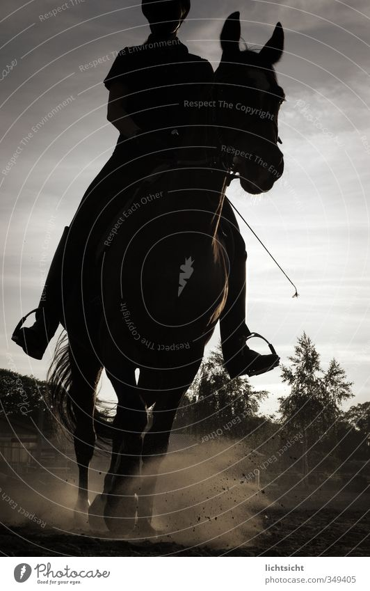 The Black Rider Adventure Equestrian sports Human being 1 Nature Landscape Sky Tree Animal Horse Sports Gallop Walking Dusty Riding stable Jodhpurs Dusk Whip