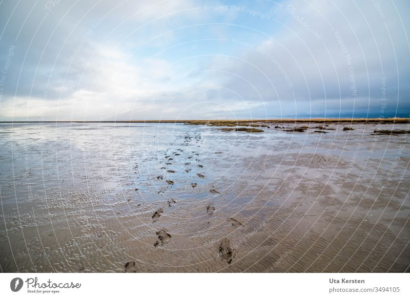 footprints in the mudflats Mud flats Walk along the tideland watt Footprint North Sea Ocean Exterior shot Water Low tide Coast Vacation & Travel Far-off places