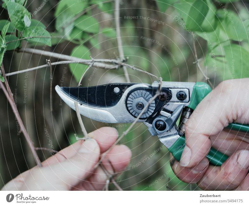 Garden shears when cutting a branch pruning shears Hand Twig Leaf Gardening Green prune Plant Growth Spring