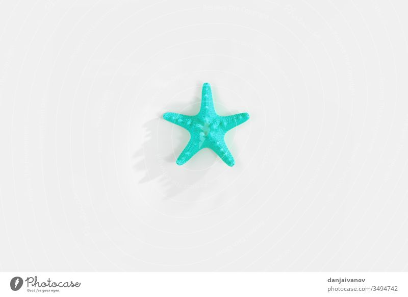 Starfishs isolated on white background beach blue decoration design marine nature ocean sea shell star starfish summer tropical