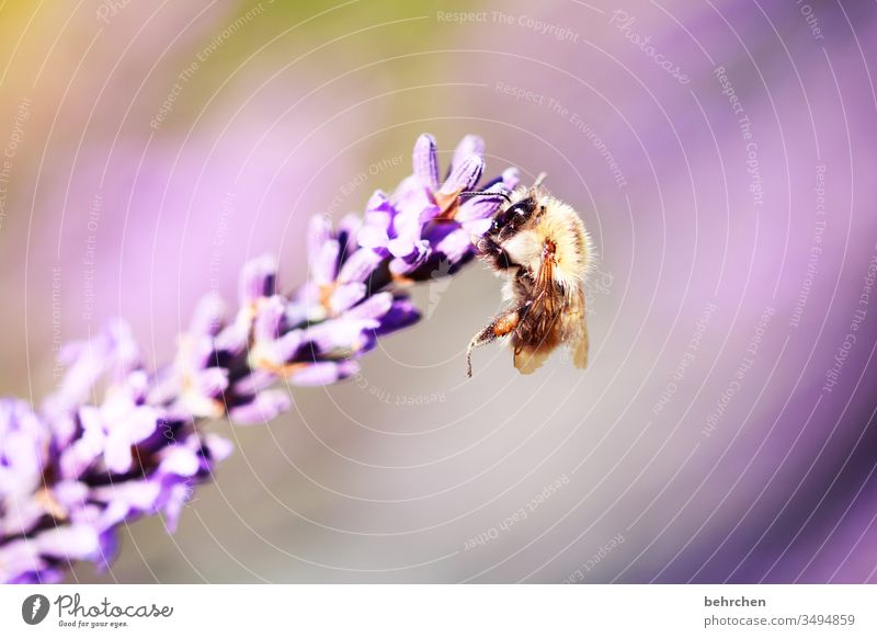 bounce back Animal portrait Blur Sunlight Contrast Light Day Deserted Detail Close-up Exterior shot Colour photo Delicate Nectar Pollen Honey Summery Small