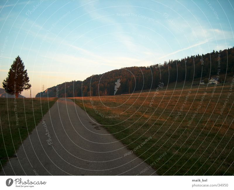 highway Alpine pasture Fir tree Mountain strass Landscape Nature Lanes & trails