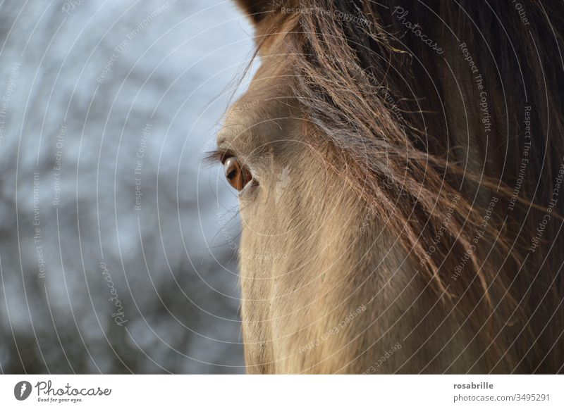 Illusion | Horse eyes see the world differently than we see it horses Horse's eyes Eyes Close-up detail Animal Pet Mount Living thing Mane look Looking Optics