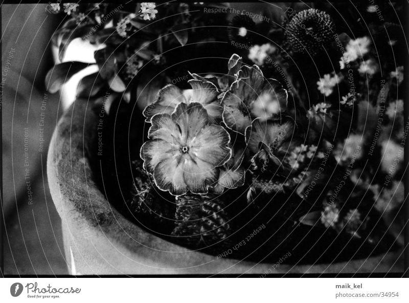 flower pot Flower Flowerpot Gray scale value Pot Things Black & white photo depth blur
