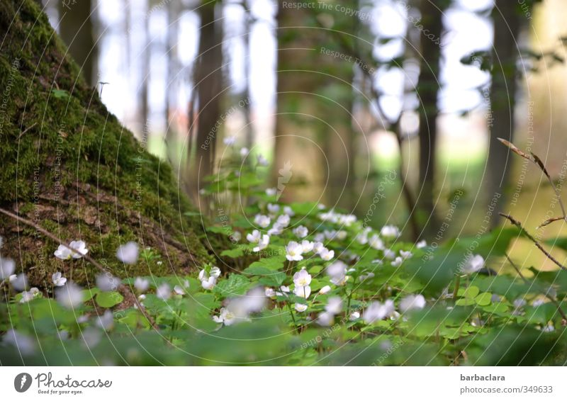 take a deep breath Nature Summer Tree Moss Leaf Blossom Clover Forest Fragrance Relaxation To enjoy Illuminate Growth Fresh Bright Many Wild Green White