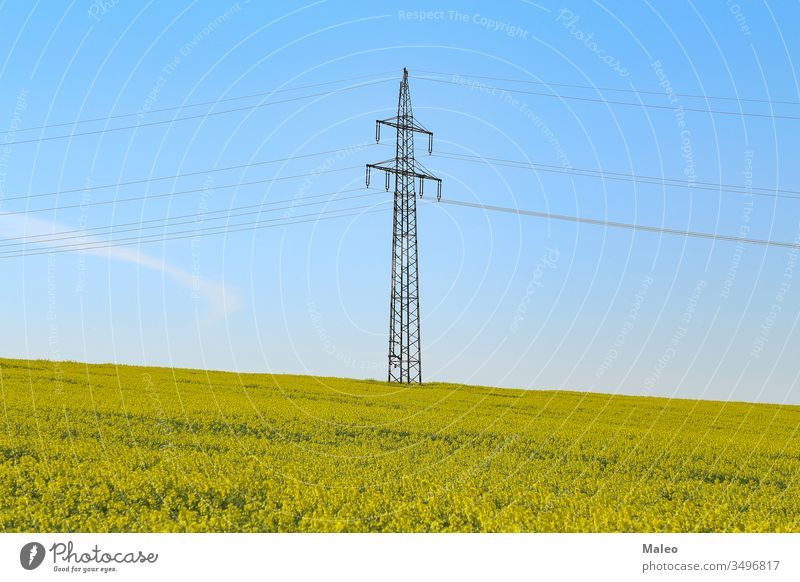 Electricity pylons in an blooming rapeseed field electricity yellow agriculture energy landscape nature plant blossom cable sky industry power blue crop oilseed