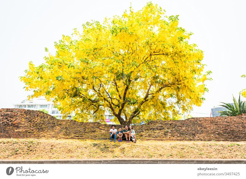 Family sitting under a huge yellow Handroanthus chrysanthus tree in full bloom silhouette adult male back sea daddy healthy walk cheerful parent day dream