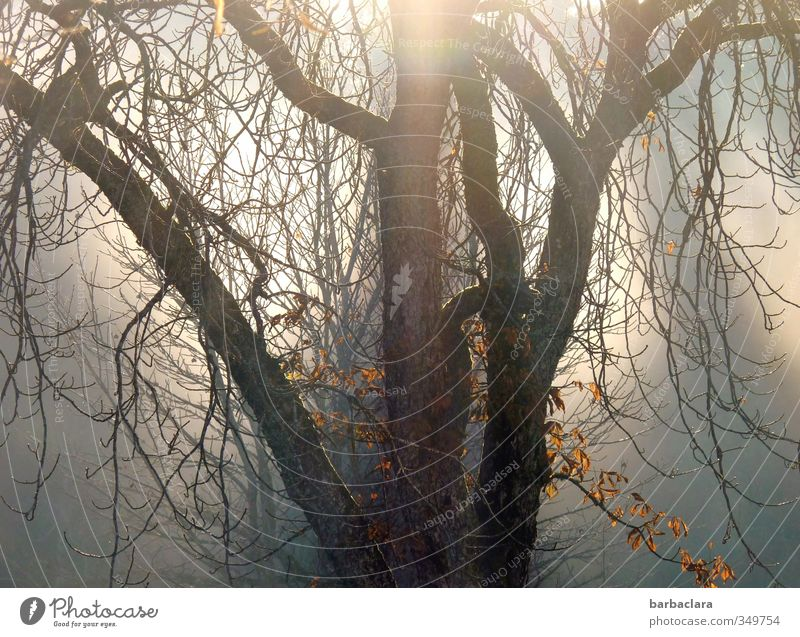 Magic Light Sun Sunlight Autumn Tree Illuminate Faded To dry up Dark Fantastic Bright Emotions Moody Hope Nature Senses Grief Transience Lose Colour photo