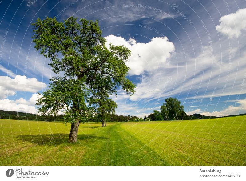 TREE Environment Nature Landscape Plant Air Sky Clouds Horizon Spring Weather Beautiful weather Warmth Tree Grass Leaf Foliage plant Meadow Field Forest Hill
