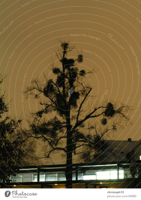 Sky Tree Winter Snow Surrealism Kassel Mistletoe