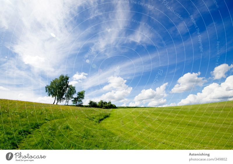 On the horizon Environment Nature Landscape Plant Air Sky Clouds Horizon Spring Weather Beautiful weather Warmth Tree Flower Bushes Leaf Foliage plant Meadow