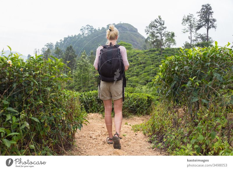 Female tourist enjoying beautiful nature of tea plantations, Sri Lanka. adventure woman free trekking travel landscape track person summer asian beauty active