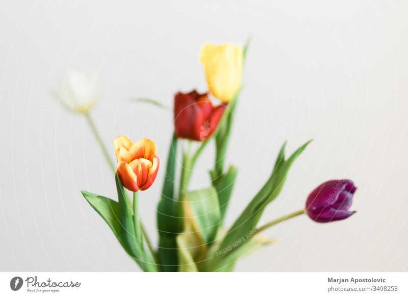 Beautiful multicolored tulips in a vase on white background arrangement banquet beautiful beauty bloom blooming blossom bouquet bulbous bunch colorful copy