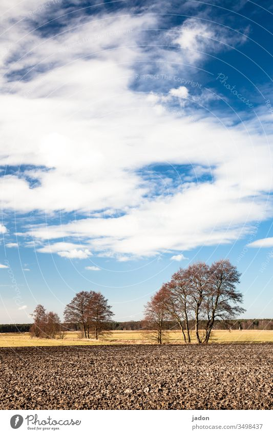 in brandenburg's woods and corridor. Tree Row of trees acre Field Landscape Exterior shot Nature Environment Sky Deserted Colour photo Green Blue Copy Space top
