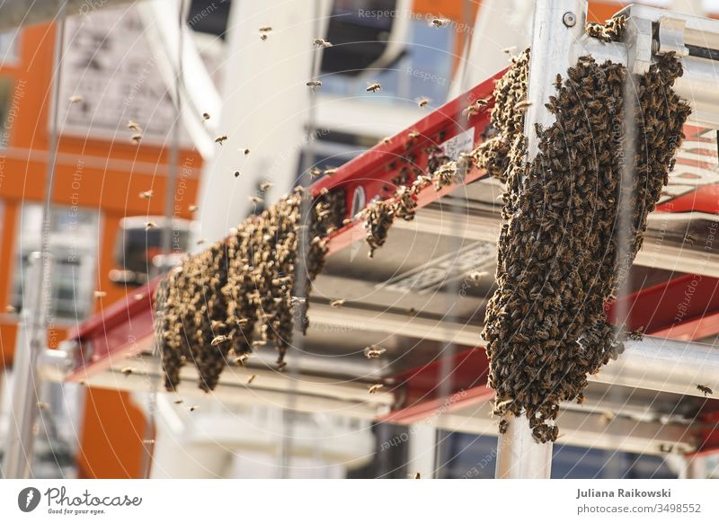 A lot of bees on a construction site Beehive Exterior shot Nature Bee-keeper Insect Honey bee Summer Colony Flock Construction site Flying Buzz Natural Animal