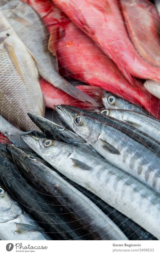 Fresh seafood market raw sale fishing fresh freshness delicious group asia natural indian ocean fishery meal closeup nature bunch animal meat purchasing fin