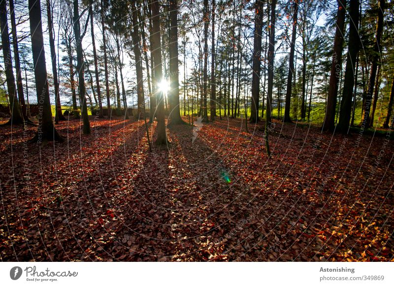 the sun looks into the forest Environment Nature Landscape Plant Sky Horizon Sun Sunrise Sunset Sunlight Spring Weather Beautiful weather Warmth Tree Bushes