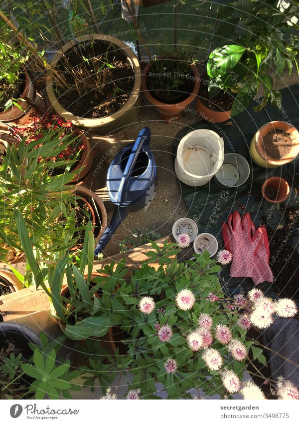 Labor Day. Balcony Balcony plant Gardening Earth Shovel glove garden Gardener plants Clay pot Pink sunny Green Brown Terracotta seramis Nature Spring Close-up