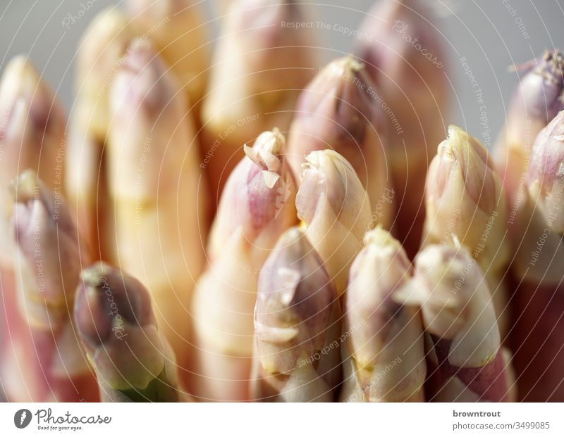White asparagus heads, close-up. Asparagus Asparagus head Vegetable Close-up Healthy Eating Spring Purple Food Vitamin Harvest Lean Light