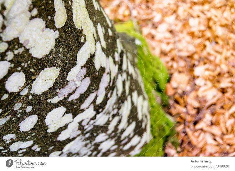 spotted Environment Nature Landscape Plant Earth Tree Forest Wood Stand Green Red Black White Point Moss Lichen Leaf Tree bark Tree trunk Colour photo