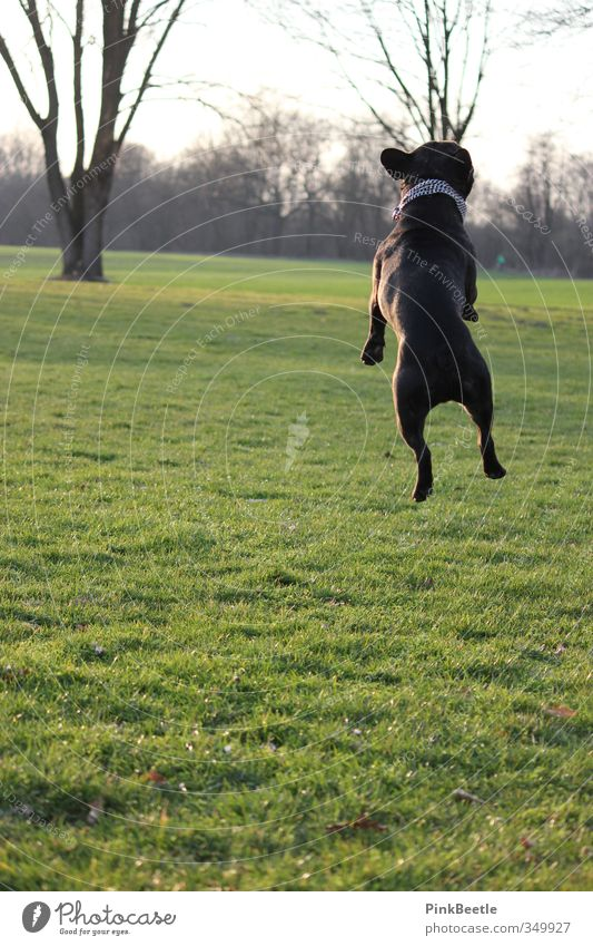 up in the air Environment Nature Animal Meadow Pet Dog 1 Jump Esthetic Athletic Free Tall Funny Positive Beautiful Crazy Green Moody Joy Happy Happiness