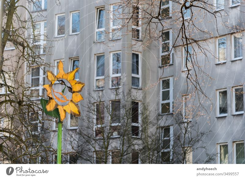The colored spot in front of the gray facade apartment architecture Background bare tree Berlin block branch building building exterior built structure city