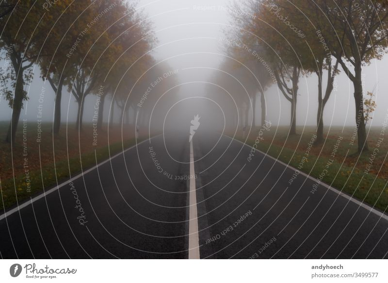 The road in autumn and thick fog asphalt avenue bad sight copy space danger dangerous divided dividing line drive driving empty empty road fall foggy forward