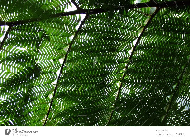 Tree Sun Green Summer Vacation & Travel Brown Palm tree Transparent Visual spectacle Pteridopsida Palm House