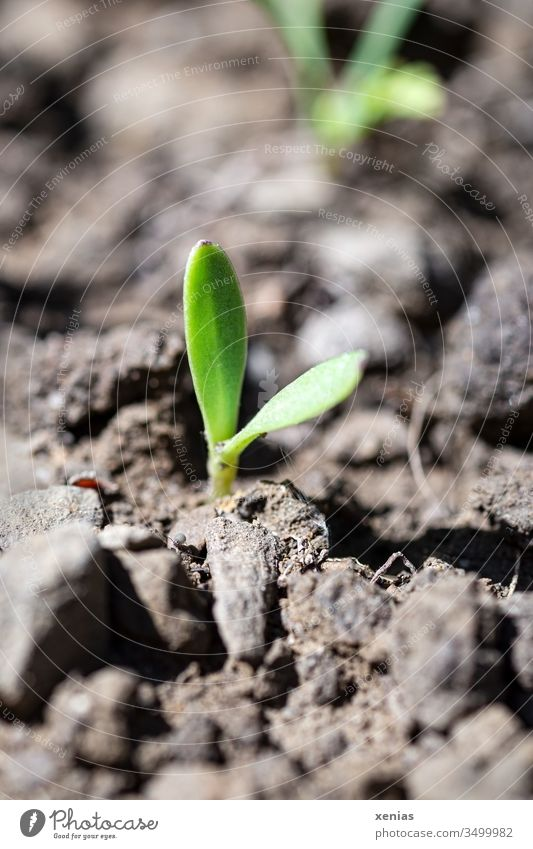the little seedling broke hopefully out of the earth and stood from now on in the merciless sun Earth topsoil Plant Hope Agriculture Growth Nature Spring Sprout