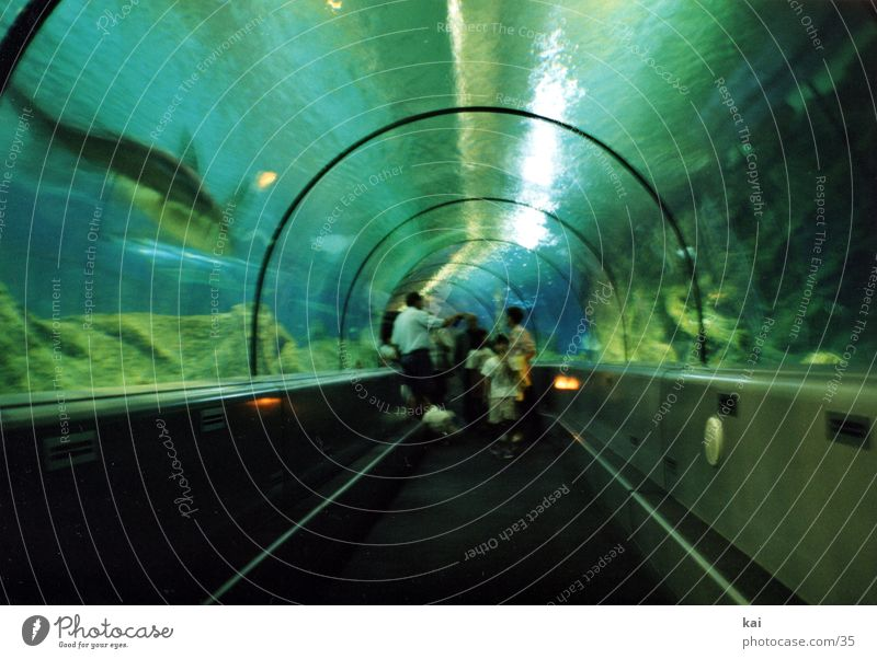 Round Tunnel Aquarium Tourist Attraction Underwater photo Shark Visitor Pane Fascinating Photographic technology Acrylic Glass roof Glazing Underwater aquarium
