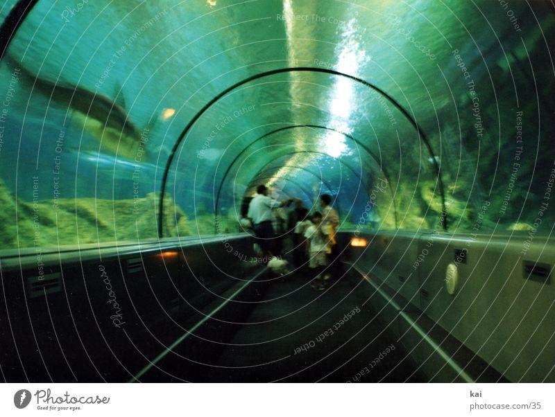 Round Tunnel Aquarium Tourist Attraction Underwater photo Shark Visitor Pane Fascinating Photographic technology Acrylic Glass roof Glazing Underwater aquarium