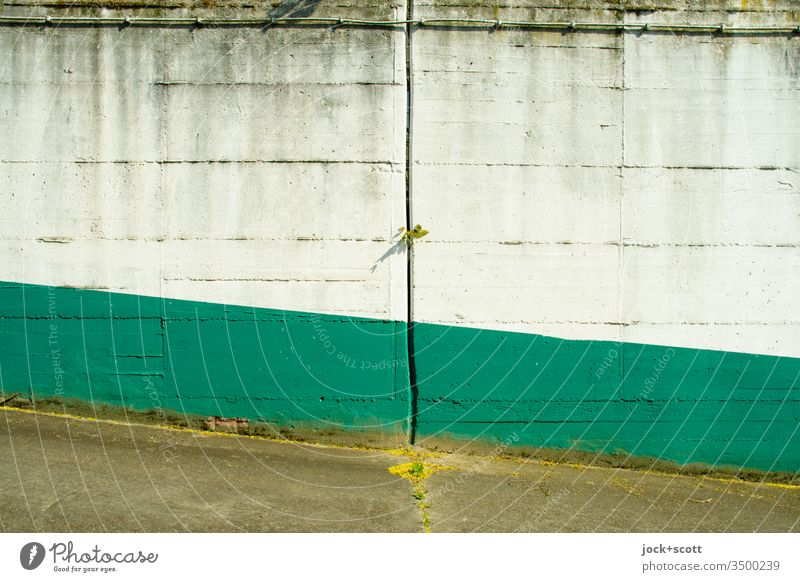 Boringly colored concrete wall with a gap through which a bit of green creeps through. Concrete wall Column Gray White Green little plant Subdued colour Ramp