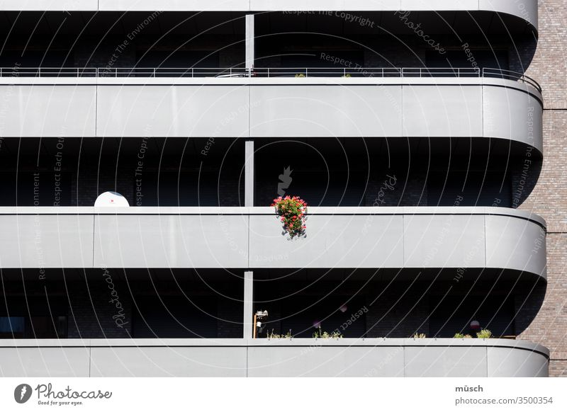 Balcony Flowers flowers Satellite Stripe High-rise Flat (apartment) Loneliness people Warmth Connection Clarity structure Shadow Architecture Facade void Town