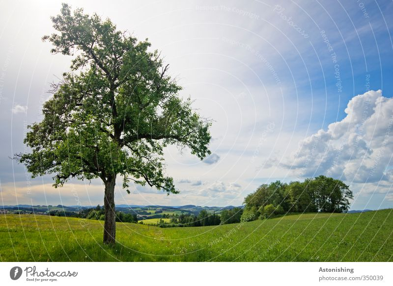 Sky Nature Blue Green White Plant Tree Loneliness Landscape Clouds Leaf Forest Environment Far-off places Meadow Warmth