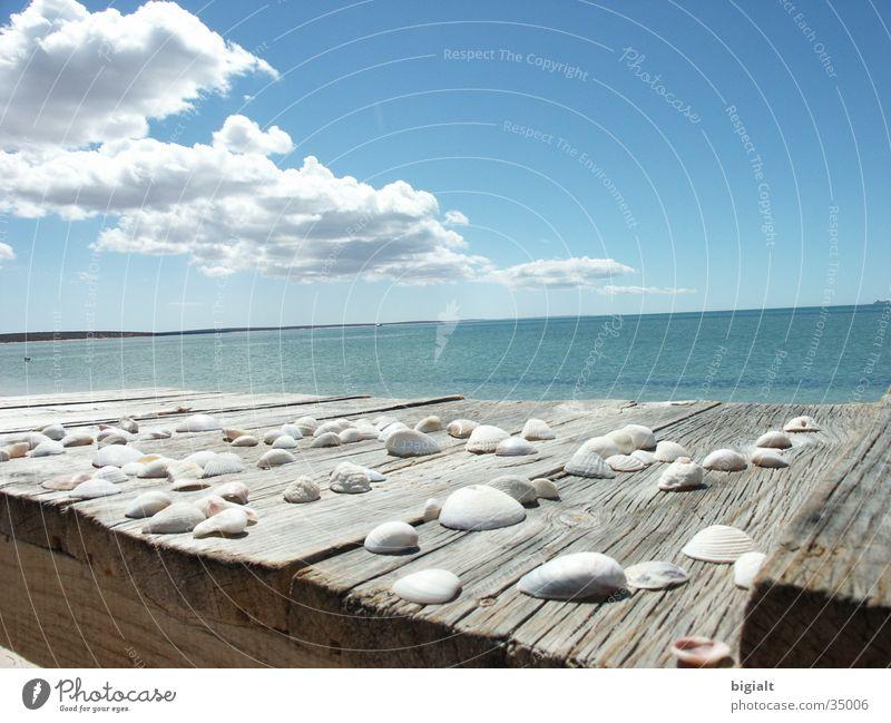 ocean Ocean Vacation & Travel Beach Mussel Loneliness Sky