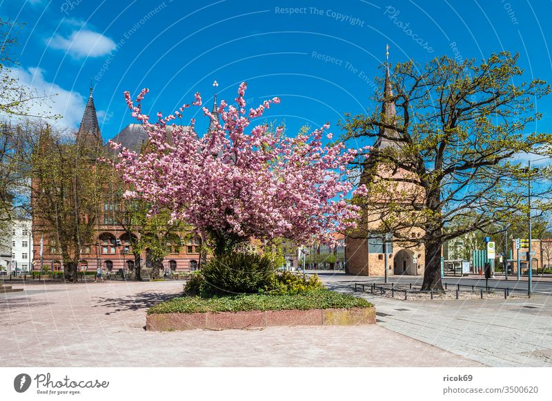 Ständehaus and stone gate in the Hanseatic City of Rostock Stone gate Architecture Building Rose garden Town Town gate Tourist Attraction center City centre