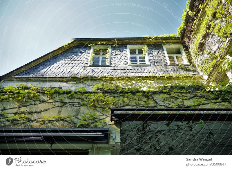 old villa House (Residential Structure) haunted house Ruin decay Disintegration process Weather dilapidated junk real estate Ivy Slate masonry Facade Villa Old