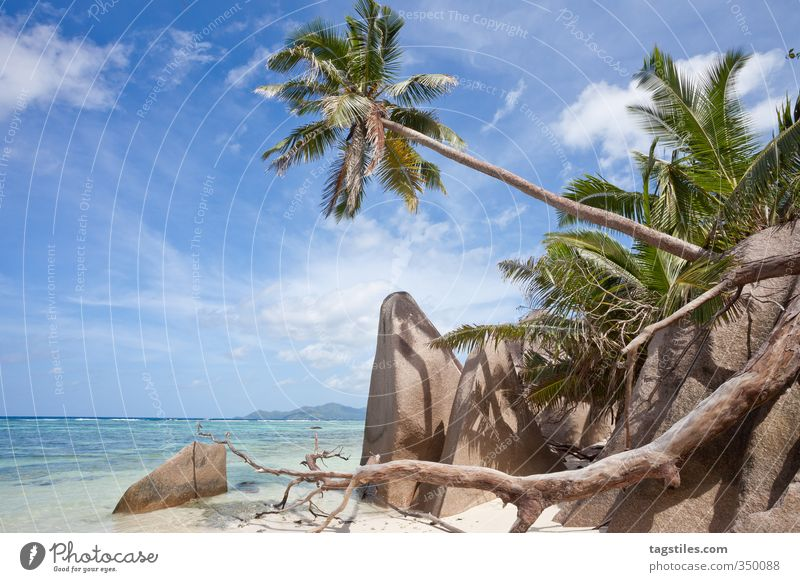 LA DIGUE, SEYCHELLES La Digue Seychelles Beach Sand Palm tree Ocean Vacation & Travel Travel photography Idyll Paradise Heavenly Paradisical Africa Granite