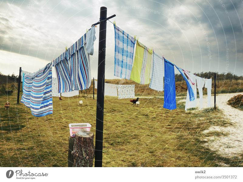 Dry wipes Laundry Washing day Clothesline Textiles Hang Wet Towels wag Wind Clothes peg Meadow Sky Clouds out Exterior shot basket Pole Pillar Grass Bushes