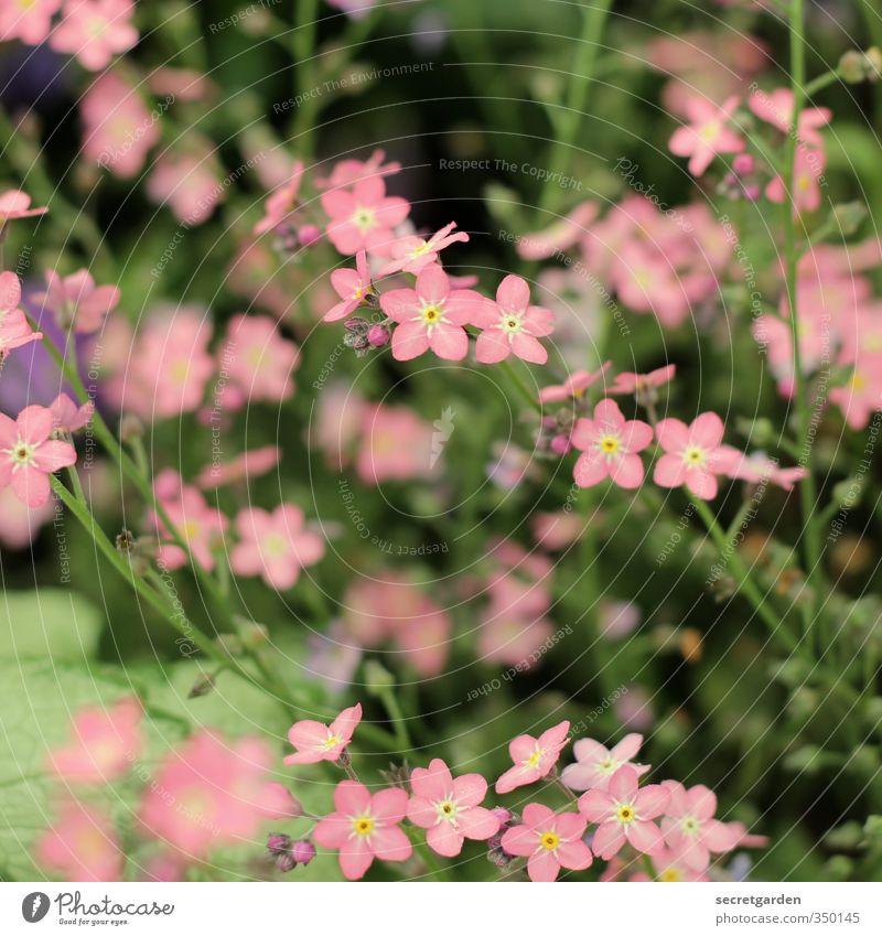 Nature Summer Plant Flower Environment Spring Blossom Garden Park Bushes Blossoming Fragrance Gardening
