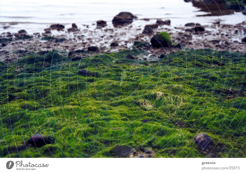 Water Ocean Green Beach Stone Algae
