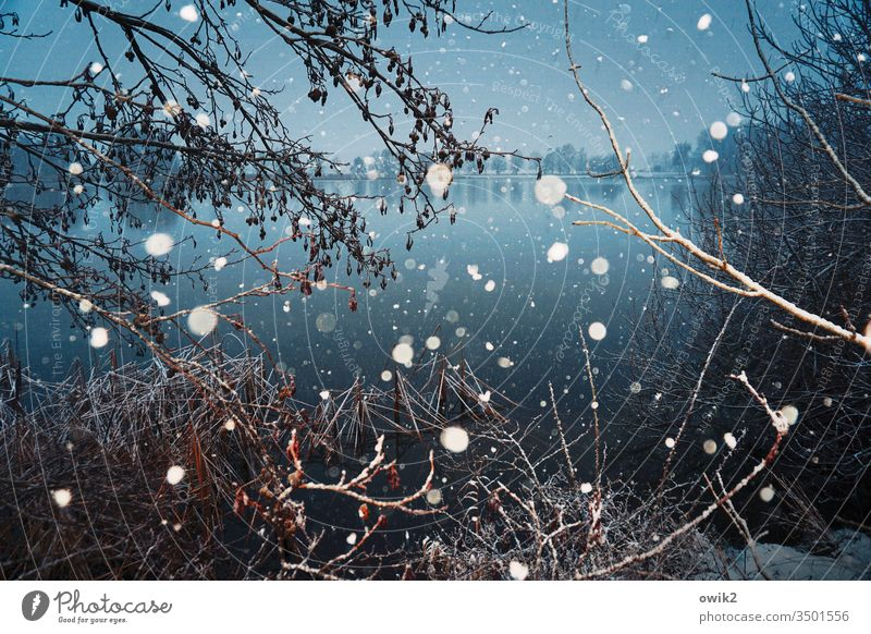 Cool Blue Winter Snow Snowfall snowflakes Cold Flash photo a lot Crazy Muddled Exterior shot Morning Undergrowth thickets Lake Water Surface of water windless