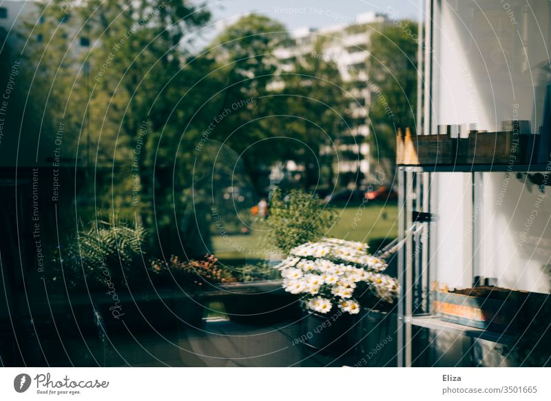 Reflection of a balcony in the window pane photographed, a bit blurred and surreal Balcony Residential area Apartment Building flowers planted plants Shelves