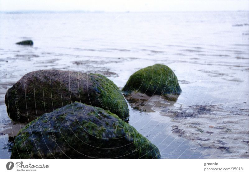 Water Ocean Beach Calm Stone Sand Wet Earth Algae